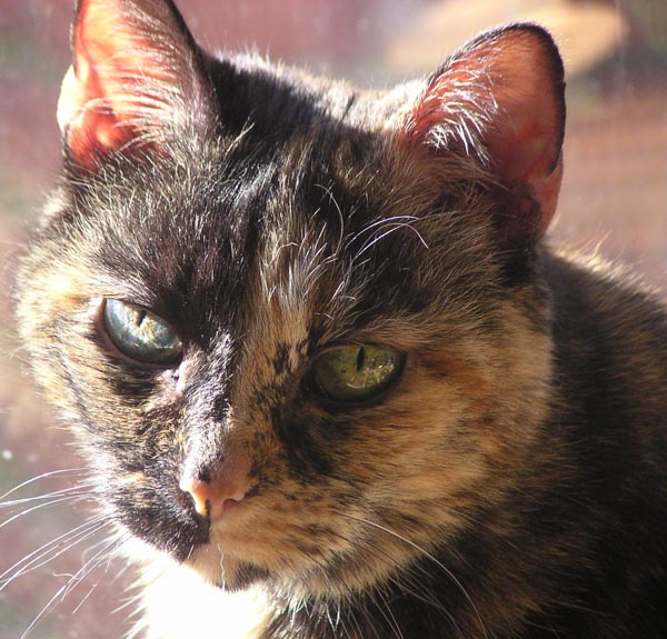 The tortoiseshell face.