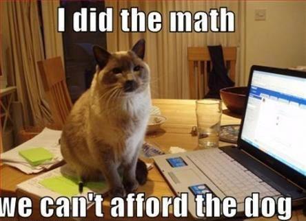 Office Cats A Growing Trend Mythreecatscom Catblog