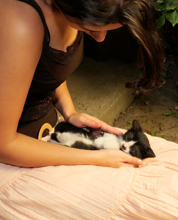 how to become a cat foster parent
