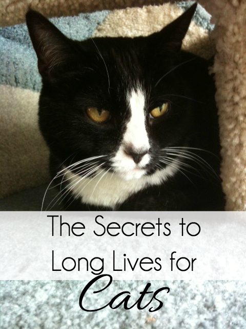 the secrets to long lives for cats