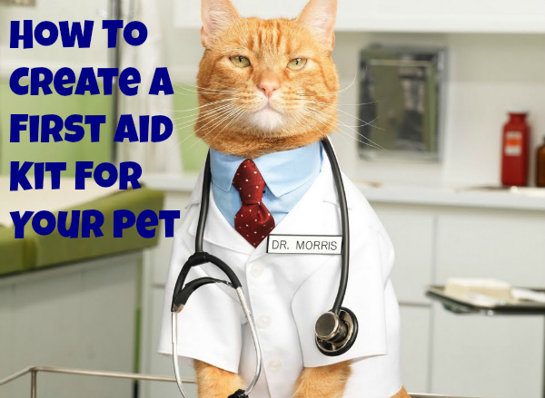 I S First Aid Antiseptic Safe For Cats