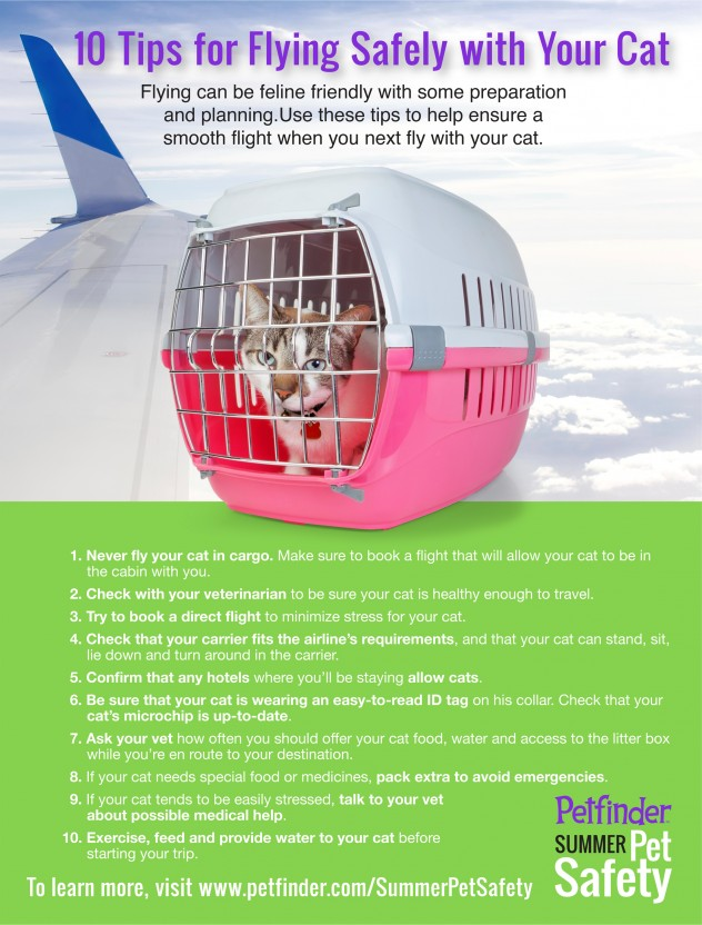 tips for flying with a cat