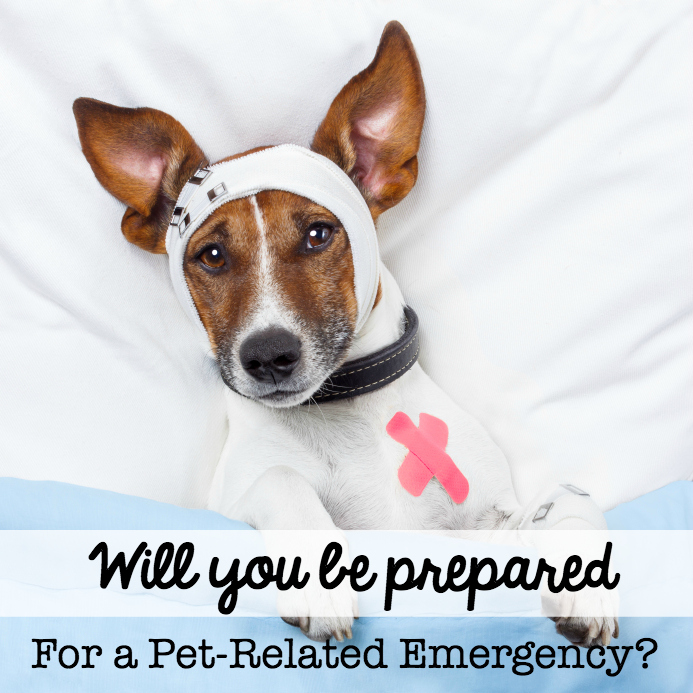 National pet first aid awareness Month