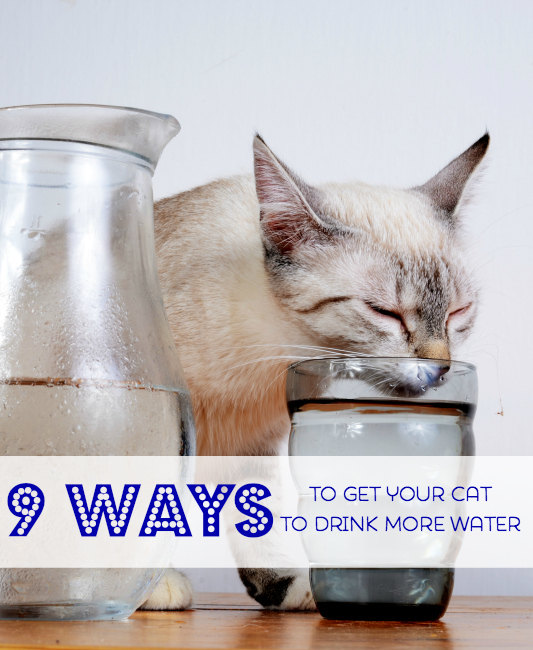 Get Your Cat to Drink More Water!